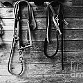 Bridles Bw by Mike Nellums