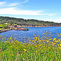Brier Island In Digby Neck-ns by Ruth Hager