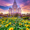Brigham City Temple by Dustin  LeFevre