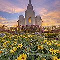 Brigham City Temple Vertical Panorama by Dustin  LeFevre