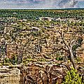 Bright Angel And El Tovar Hotel South Rim by Bob and Nadine Johnston