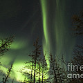 Bright Aurora Borealis, Lake Laberge by Philip Hart