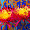 Bright Colorful Mums by Garry Gay