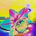 Bright Daff by Carol Lynch
