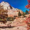 Bright Fall Colors At Zion by John M Bailey