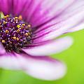 Bright Floral Display by Natalie Kinnear