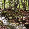 Bright Forest Creek by Dreamland Media