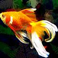 Bright Golden Fish In Dark Pond by Elaine Plesser