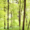 Bright green forest in spring with beautiful soft light
