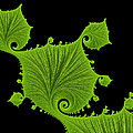 Bright Green Fractal Leaves Black Background by Matthias Hauser