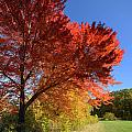 Bright Orange Of Fall by Amy Cicconi