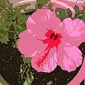 Bright Pink by Lovina Wright