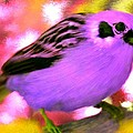 Bright Purple Finch by Bruce Nutting