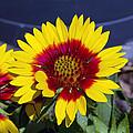 Bright Summer Flower  by Justin  Rudicel