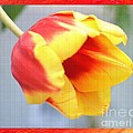Bright Tulip by Maria Urso