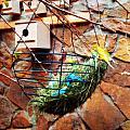Bright Wings by Alicia Forton