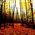 Bright Woods by Alicia Forton