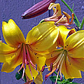 Bright Yellow Lilies by Mike and Sharon Mathews