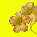 Bright Yellow by Paul Pecora