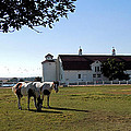 Brighton Barn And Horses by Heather Coen