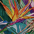 Brillant Bird Of Paradise by Terry Holliday