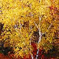 Brilliance Of Autumn On Rib Mountain by Tiffany Erdman