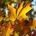 Brilliant Autumn Light And Color by Dan Sproul