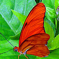 Brilliant Butterfly by Lydia Holly