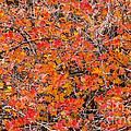 Brilliant Colors by Bob Phillips