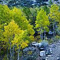 Brilliant Fall Color by Glen Wilkerson