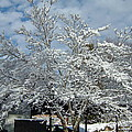 Brilliant Snow Coated Tree by Susan Wyman