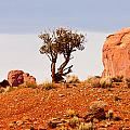Bristlecone Pine by Peter Tellone