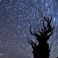 Bristlecone Star Trails by Cat Connor