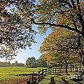 British Autumn by Julia Gavin