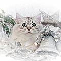 British Longhair Cat Christmas Time II by Melanie Viola