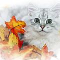 British Longhair Cat by Melanie Viola
