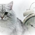British Longhair Cat Time Goes By by Melanie Viola