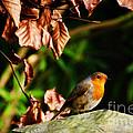 British Nature by Susie Peek