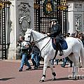 British Royal Guards Perform The Changing Of The Guard In Buckingham Palace by Michal Bednarek