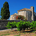 Brittany Vineyard And Monastery  by Dave Mills