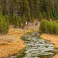 Broad Creek Yellowstone by Brenda Jacobs