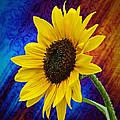 Brocade Daisy by Judy  Johnson