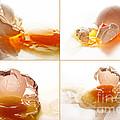 Broken Chicken Eggs by Sabine Jacobs