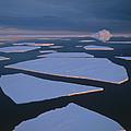 Broken Fast Ice Under Midnight Sun East by Tui De Roy