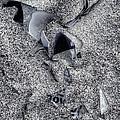 Broken Glass by Steve Gravano