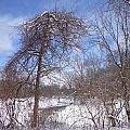 Broken Tree by Jacque Hudson