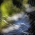 Broken Web by Larry Pegram