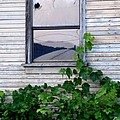 Broken Window by Everett Bowers