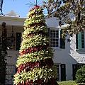 Bromelia Christmas Tree by Christiane Schulze Art And Photography