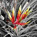 Bromeliad 1 by Gregory Everts